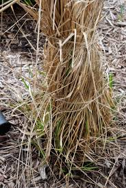 tie up your grass grasses gardens and raspberry plants