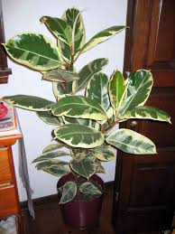 best house plants articles with best house plants for texas tag best house plant