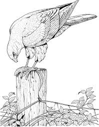 coloring pages for realistic bird coloring pages murderthestout