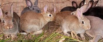 rabbit banner rabbit farming mamta childcare trust