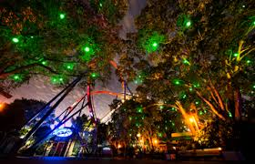shows and lights busch gardens ta bay