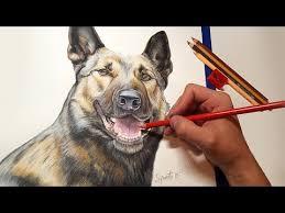 belgian shepherd diesel max a belgian malinois dog colored pencil photorealist portrait