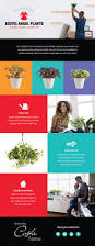 Perfect For The Office On by 21 Best Colorful Houseplants To Decorate Your Home Or Office