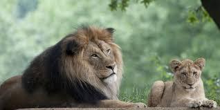 snore u0026 roar sleepovers for families smithsonian u0027s national zoo