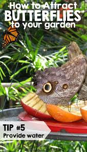 71 best diy bird feeders u0026 butterfly garden ideas images on