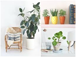 freshen your space with these indoor gardening tips eieihome
