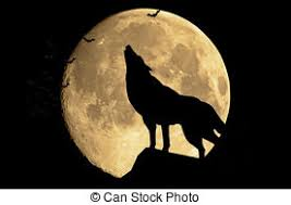 wolf howling moon stock photo images 438 wolf howling moon
