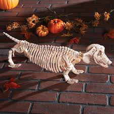 dachshund skeleton decoration from collections etc