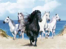 horse background wallpaper wallpapersafari