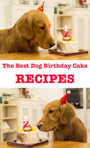 birthday cakes for dogs the best dog birthday cake recipes for your pup s special day