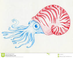 blue mollusc in a red shell stock photo image 34146210