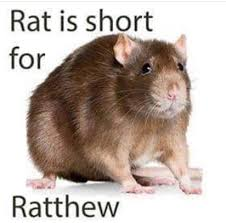 Rat Meme - ratthew bike is short for bichael know your meme