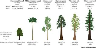 the unique challenges of conserving large old trees trends in