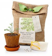 condolence gift ideas sympathy gift ideas by gifttree
