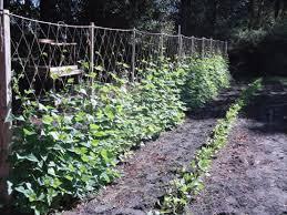 Garden Netting Trellis Pole Bean Trellis Makes Your Garden Neat And Productive