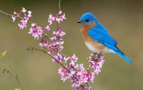 Florida Backyard Birds - 10 backyard birds you should attract to your garden hello insect