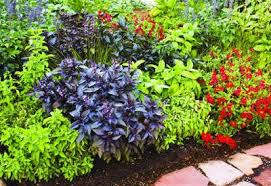 gardening 101 planning and design guide planet natural