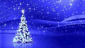 sparkling christmas trees shining in the starry night christmas