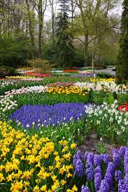 colorful flower gardens