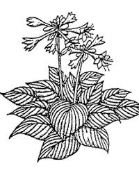 leo the late bloomer coloring page perennials popes u0027 gardens