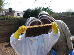 can you keep bees starting out bees guide omlet uk