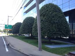 tree or shrub archives page clearview tree removal nassau county tree service archives page