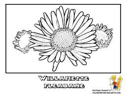 33 free flourishing flower coloring pages images