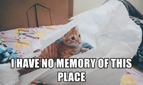 Lost Cat Meme - i have no memory of this place lost cat meme generator