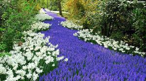 beautiful flower garden wallpaper download wallpapers page
