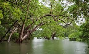 costa rica jungle tours u0026 mangrove excursions