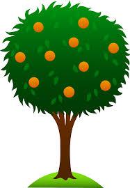 sweet orange tree free clip