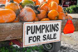 pumpkins for sale pumpkins for sale stock image image of country custom 46122351