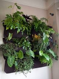 woolly pocket living walls vertical gardens indoor wall garden