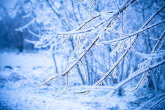 frosty branch tree stock photo image of branch outdoors 17767104