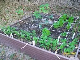 deeny u0027s simple joys my backyard vegetable garden endeavor part 4