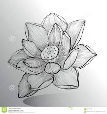 lotus flower sketch stock vector image 59103513 1300x1390