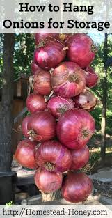 how to hang onions for storage homesteads onions and storage