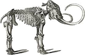 free dinosaur bones clipart image 6263 free dinosaur bones clip