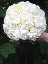 white hydrangea bouquet and white wedding at samuel s grande manor in williamsville