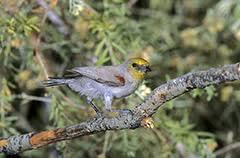 Nc Backyard Birds Common Feeder Birds