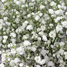 wedding flowers bulk wholesale flowers bulk wedding flowers online bloomsbythebox