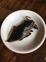 we ate bugs at seattle restaurants this one tasted like apple