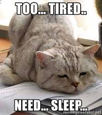 Too Tired Meme - too tired need sleep tired cat meme generator