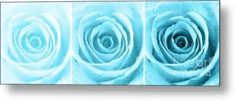turquoise roses trio turquoise photograph by natalie kinnear