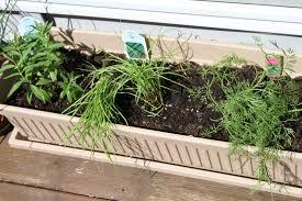 Herb Container Garden - tasty travels food talks i listen herb container garden