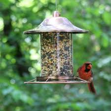 amazon com perky pet copper panorama bird feeder 312c wild