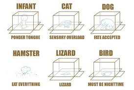 Cardboard Box Meme - animals and boxes meme