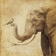 elephant drawings fine art america