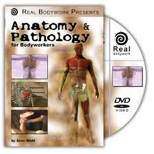 Anatomy And Physiology Songs Learn The Muscles Of The Human Body Muscle Anatomy Song For Kids