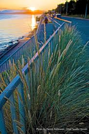 Me Kwa Mooks Park West Seattle by 185 Best West Seattle Sunsets Images On Pinterest Sunsets West